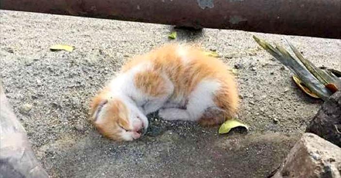 道端の子猫