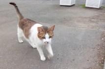 駆け寄ってきた猫