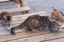 母猫のシッポで遊ぶ子猫