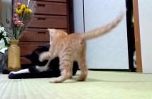 弱い猫パンチ