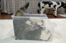 はまっている猫