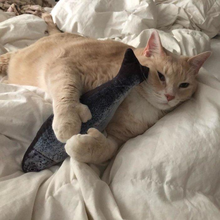ギュッとする猫