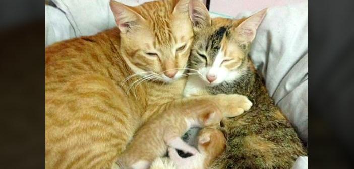 子猫を育てる父猫