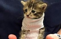 ハリケーンから助け出された子猫