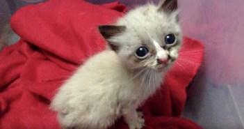 抱きついてきた子猫
