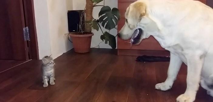 初めて出会った先住犬にドキドキの子猫ちゃん。先住犬の猛アプローチに心を開いて、可愛い行動に出た ( *´艸`)♡