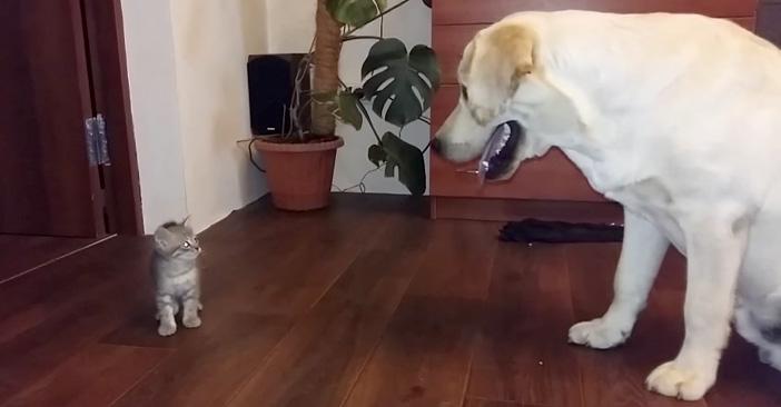 初めて出会った犬と子猫