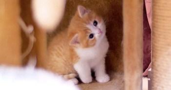 ミルク時間の子猫