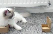 小さな箱を見つけた猫