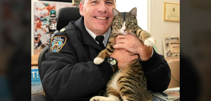 警察署の猫