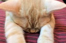 いじける猫