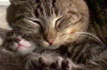子猫好きの老猫