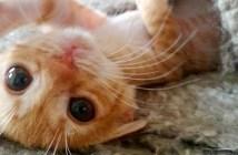 生まれ変わった子猫