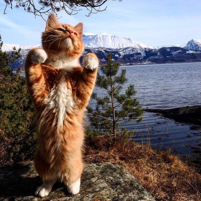 伸びる子猫