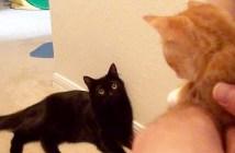 猫達の初めての出会い