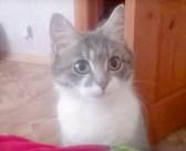 子猫を出産したばかりの母猫。飼い主さんに可愛い子猫達を見に来てもらいたくて、何度も誘ってきた ( *´艸`)♡