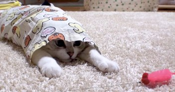 パジャマに入る猫さん