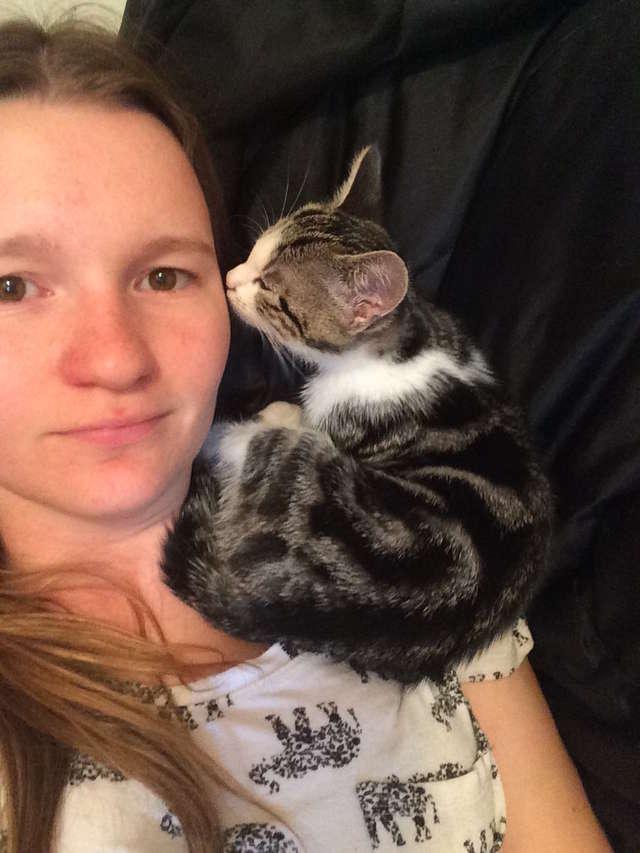 キスする猫