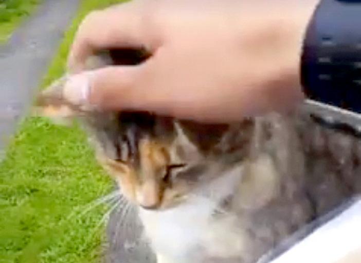 郵便配達員に会いにくる猫
