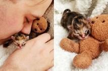 未熟児の子猫が成長