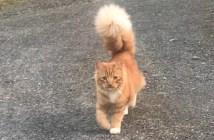 シッポの巨大な猫