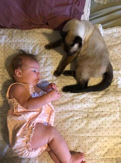 赤ちゃんを見守る猫