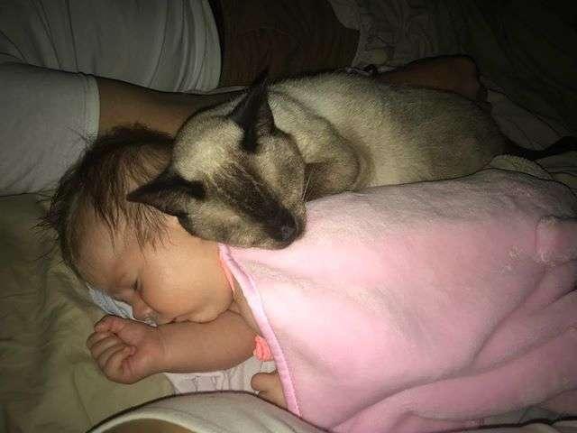 赤ちゃんが大好きな猫