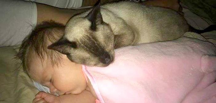 衰弱した身体で保護され、人間を非常に怖がっていた猫。迎えられた家で赤ちゃんに出会うと、驚くほどの変化が!