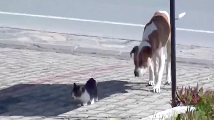 猫を心配する犬