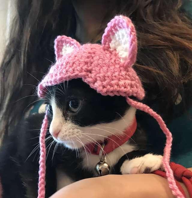 耳を被った猫