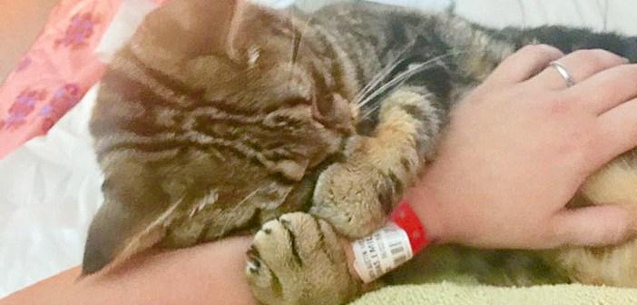 ガゾリンスタンドで見つかった猫