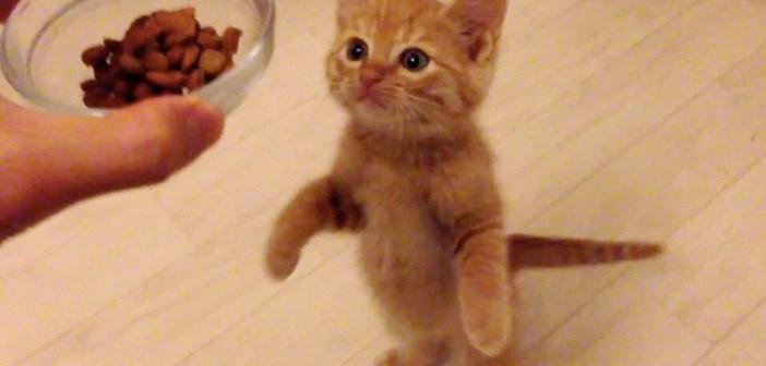 ご飯を守る子猫
