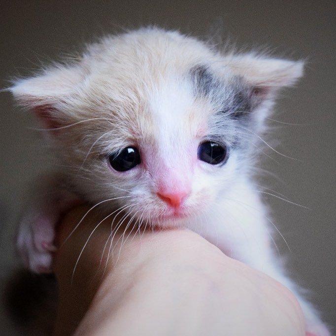 持たれる子猫