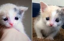悲しそうな目の子猫