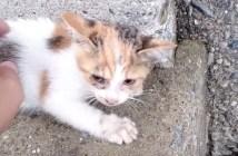 高い橋から落ちた子猫