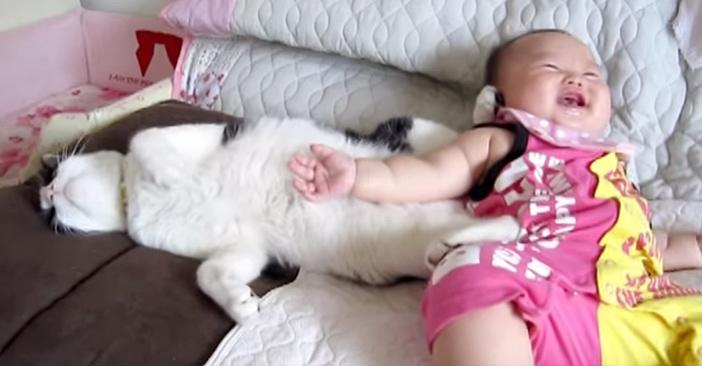 子守りをする猫