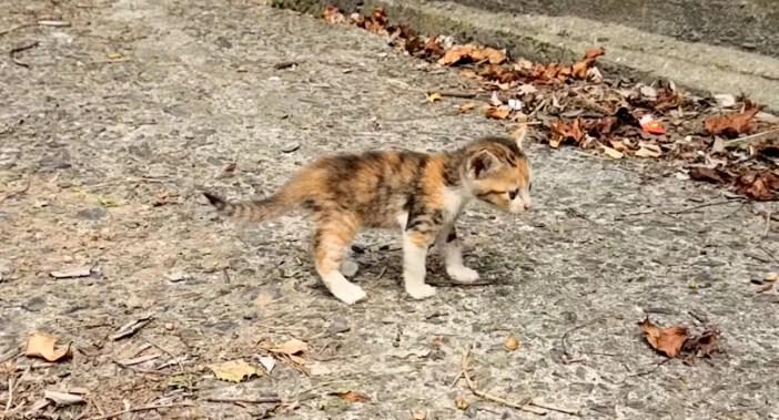 登りきった子猫