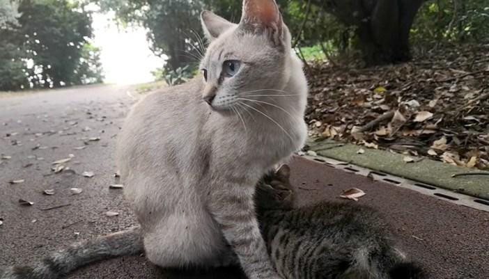 見つめる母猫