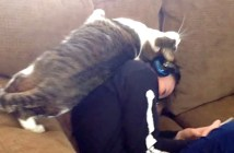 スリスリが止まらない猫