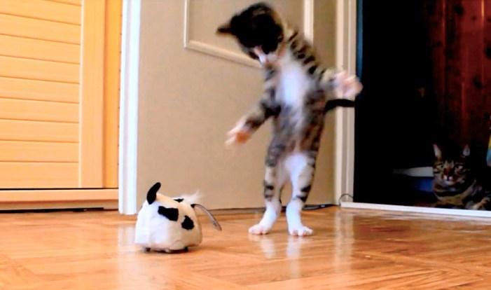 飛び跳ねて遊ぶ子猫
