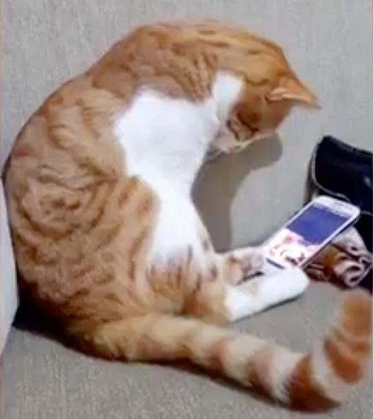 ビデオを見る猫