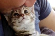 笑顔の子猫