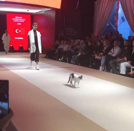 ファッションショーに現れた猫