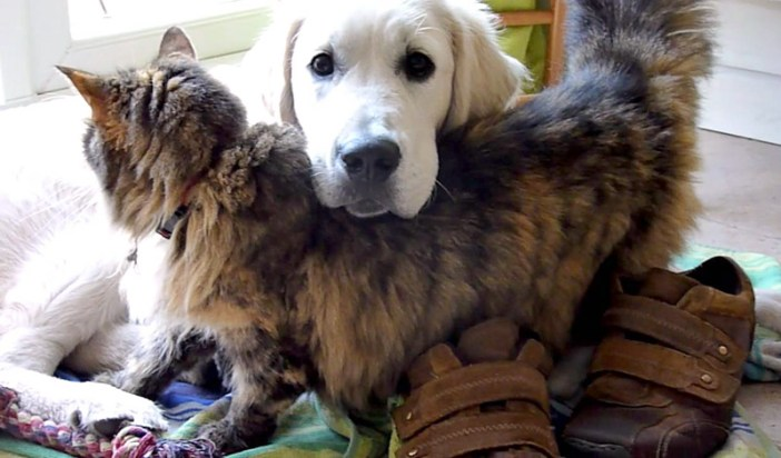 くっつく犬と猫