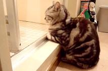お風呂待ちをする猫