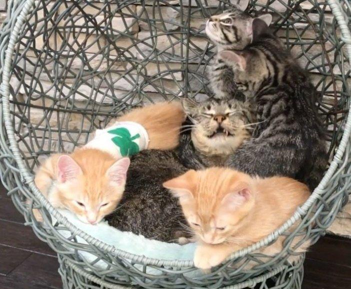 たくさんの子猫と猫