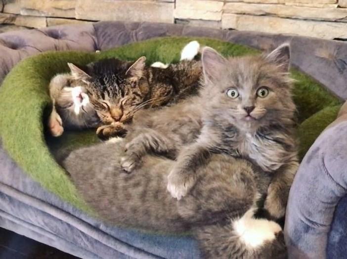 幸せな猫と子猫