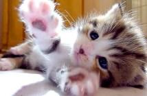 ペチペチする子猫