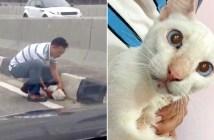車道にいた猫