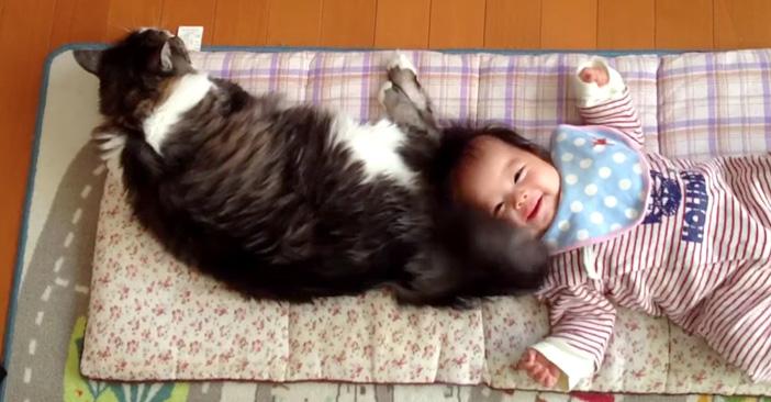 赤ちゃんをシッポであやす猫